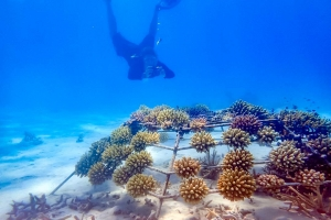 Lauren's blog – marine biology volunteer with Seamarc Maldives – Reefscapers coral frames photography 1080 3x2-3 (Lauren's Marine Biology Blog)