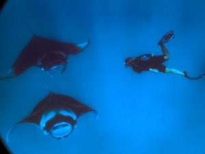 Lauren's blog – marine biology volunteer with Seamarc Maldives – mantas (Lauren's Marine Biology Blog)