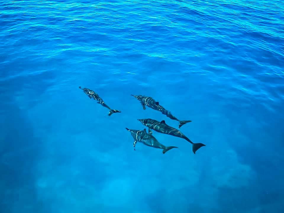 Marine Life - Dolphin Safari (2)