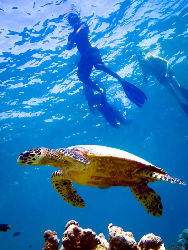 Marine Safari - Turtle with Snorkellers