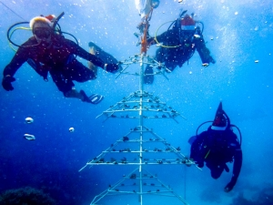 Reefscapers Xmas Tree Frame