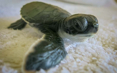 Our Turtle Conservation Programmes