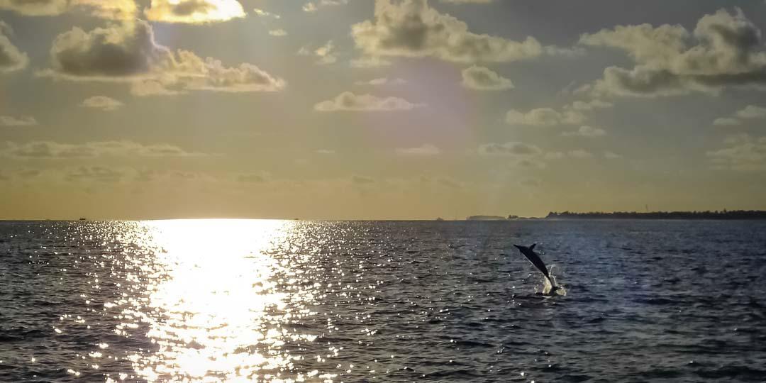 Emily – marine biology intern, Seamarc Maldives (3)