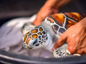 (Updates From Our Sea Turtle Teams)
