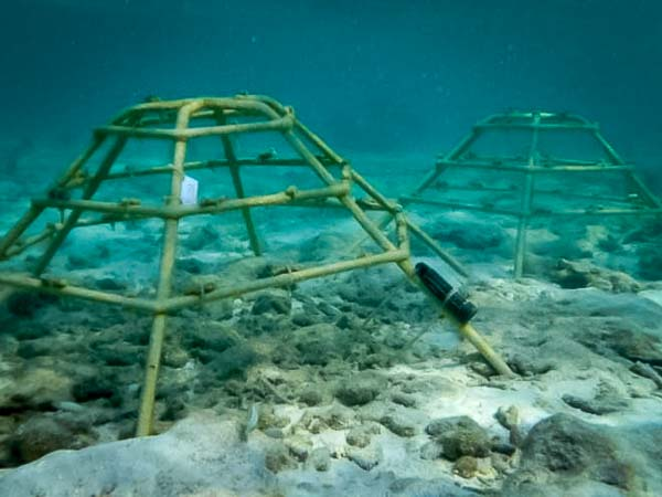 Reefscapers - frames 1 and 2 (deployed 5th Jan 16)