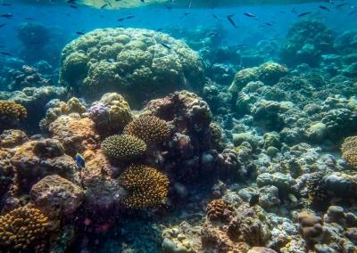Snorkel safari - coral reef