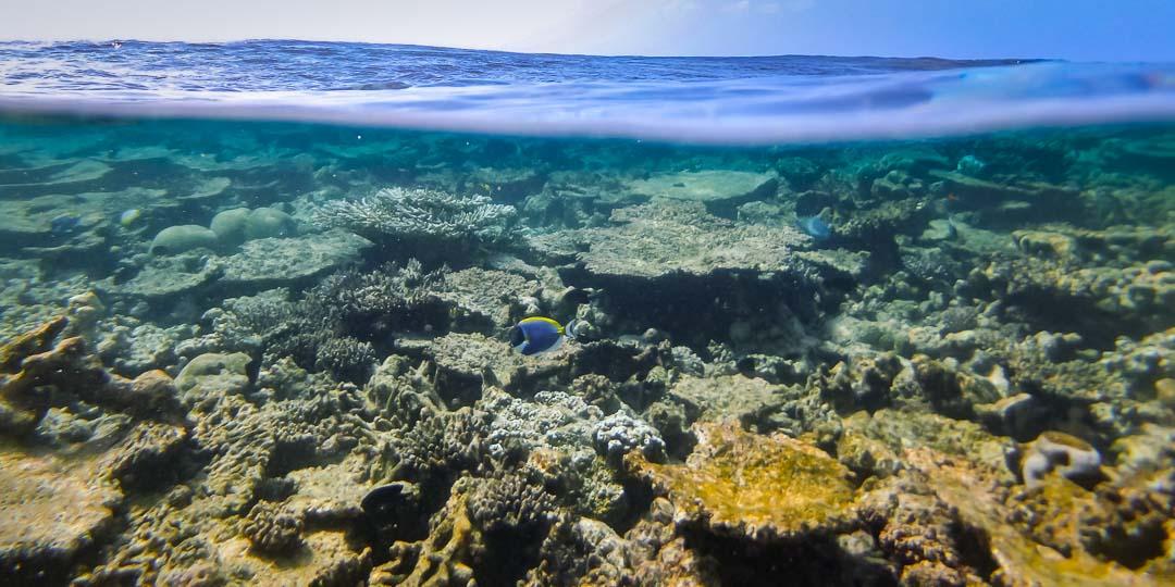 Emily ch2 – marine biology intern, Seamarc Maldives (3) coral reef