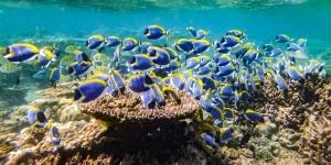 Emily ch2 – marine biology intern, Seamarc Maldives (4) coral reef 1920 (Emily's Adventures – Chapter 2)