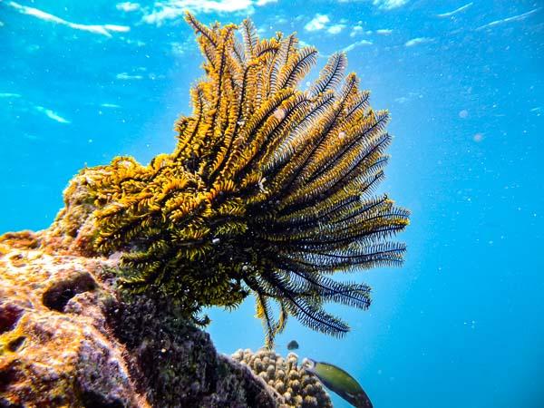 Emily ch2 – marine biology intern, Seamarc Maldives (6)