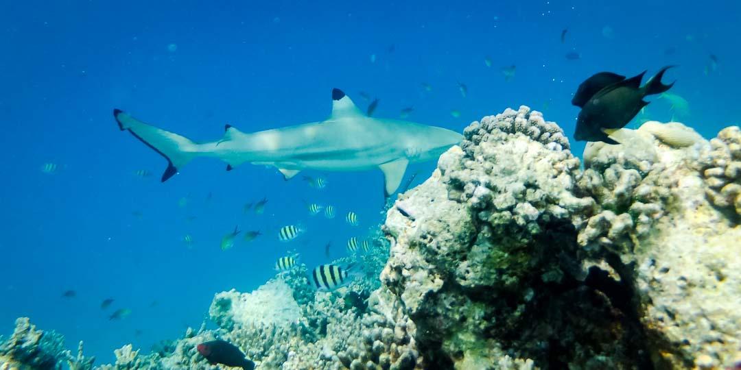 Emily's internship Marine Savers Maldives (9525) reef
