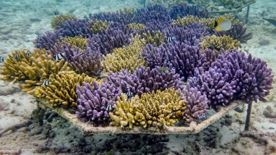 Coral Frame Updates