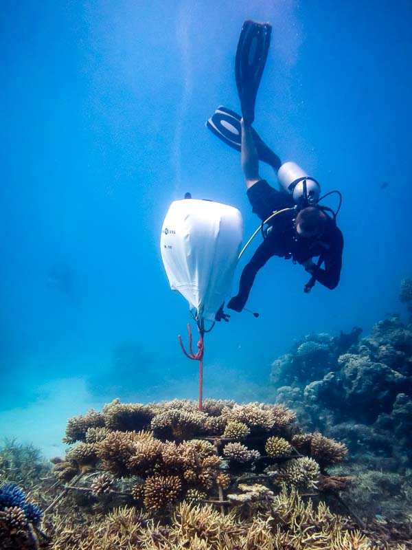 Reefscapers - airlift bags to relocate coral frames (Marine Savers Maldives)