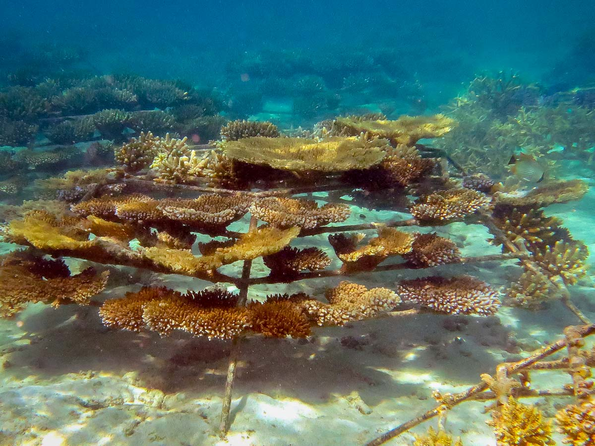 Coral bleaching, frame KH1124 (24-dec-15) Reefscapers Maldives