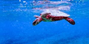 Emily's blog – Marine biology internship Maldives (Emily's Adventures – Chapter 4)