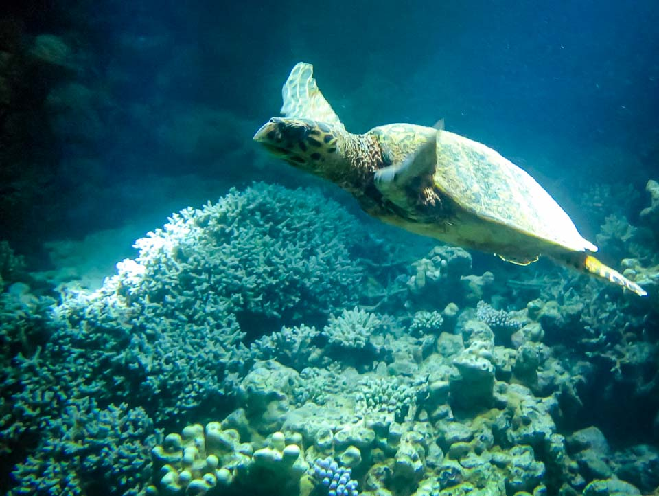 Excursions - wild hawksbill, night snorkel Marine Savers Maldives