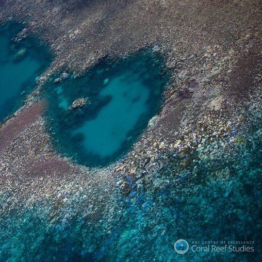 Great Barrier Reef – 93pc bleach