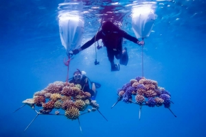 Reefscapers – airlift bags to relocate coral frames (Marine Savers Maldives) (Reefscapers Coral Frames)