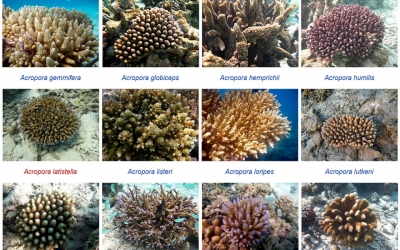 Coral Taxonomy Project