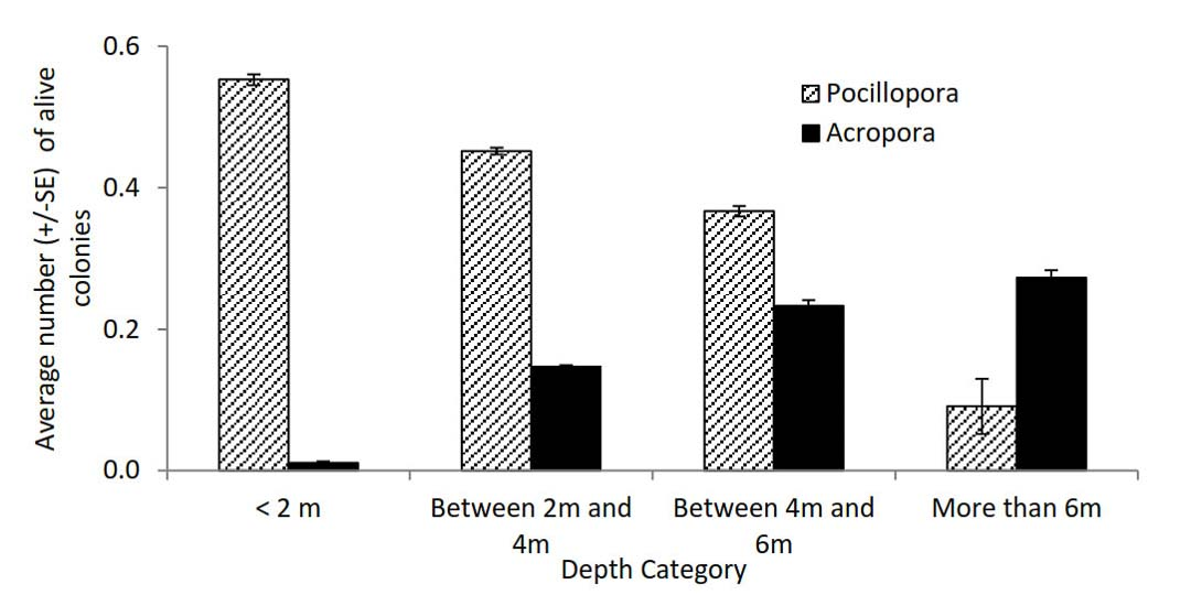 Coral bleaching and survival - Acropora and Pocillopora at different depths