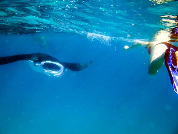 Excursions - Manta ray sighted on a snorkel trip Marine Savers Maldives
