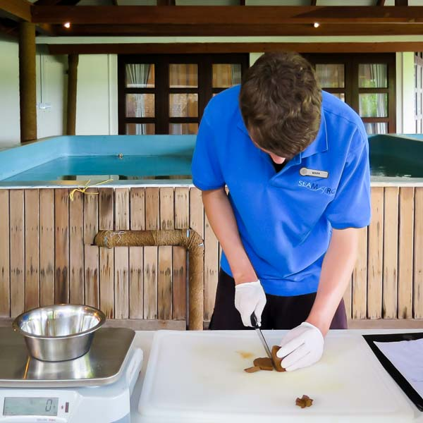 mark-eco-volunteer-cutting-turtle-food-maldives