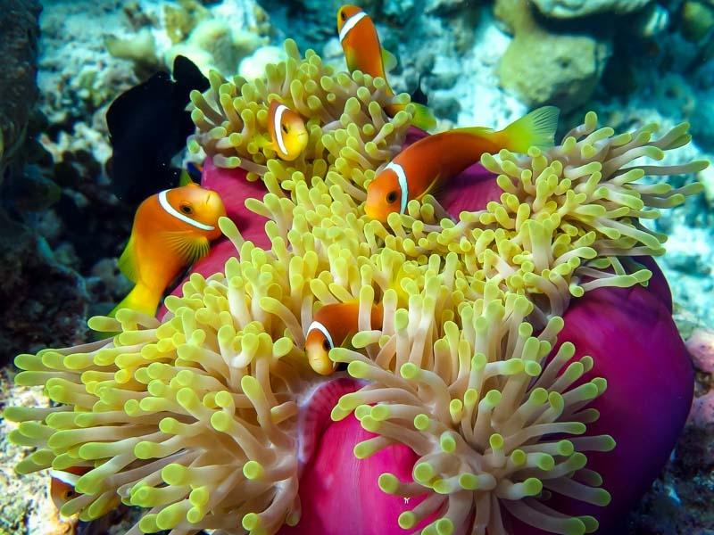 Marine Life – Lab and Ocean