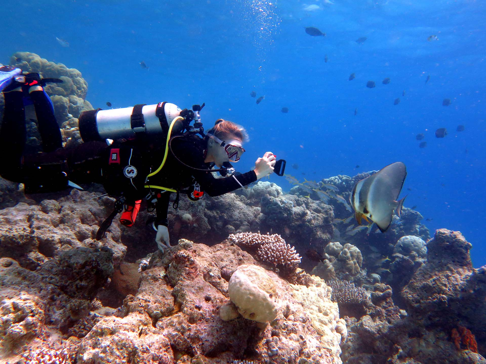 Seamarc Maldives Volunteering - wonderful natural coral reef