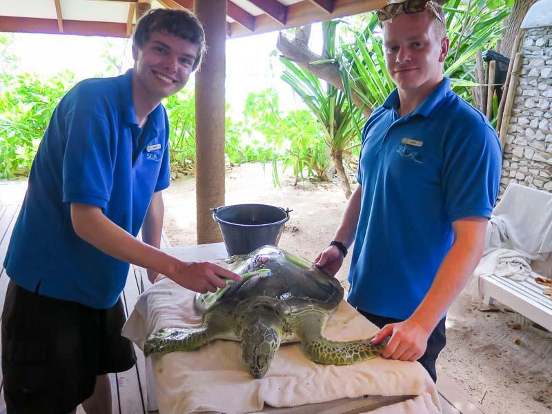 Seamarc Maldives Volunteers - Mark's blog - turtles