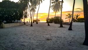 Seamarc Maldives Volunteers – Nicole's blog (Nicole's Daily Diary)