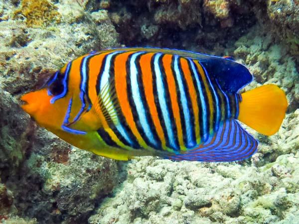 Snorkel Safari - Marine Savers Maldives