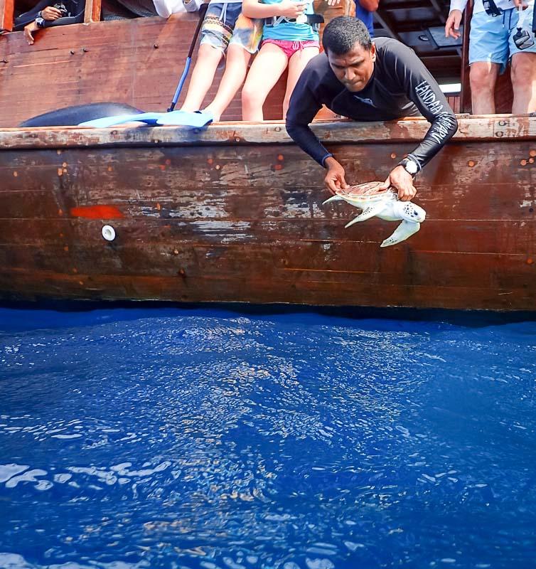 Midori and Verde release - turtle head start Maldives