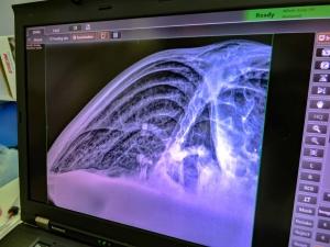 La Petite - turtle X-ray - pneumonia