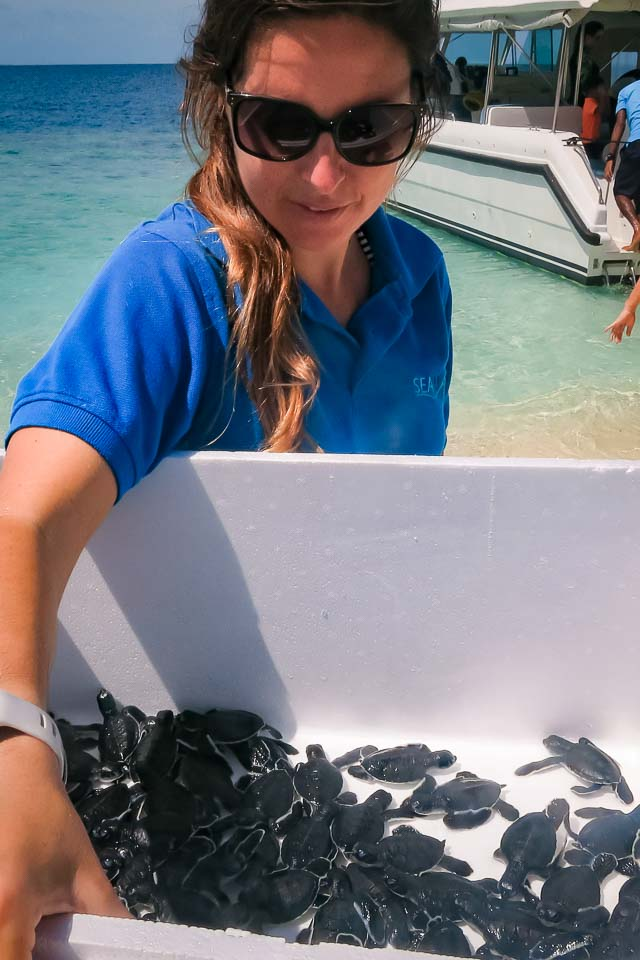 Turtle hatchlings from our Nest Protection, Marine Savers Maldives