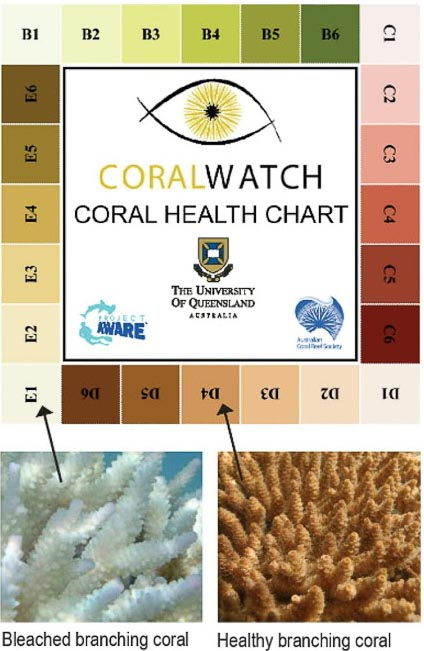CoralWatch – colour chart2
