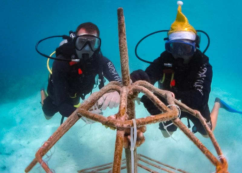 Reefscapers Xmas tree coral frame at Kuda Huraa