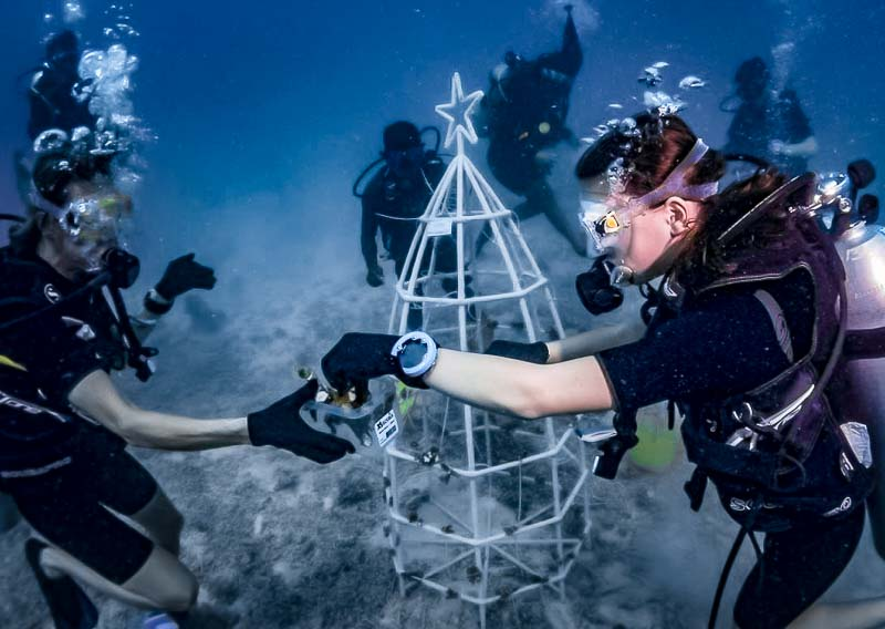 Reefscapers festive Xmas tree dive