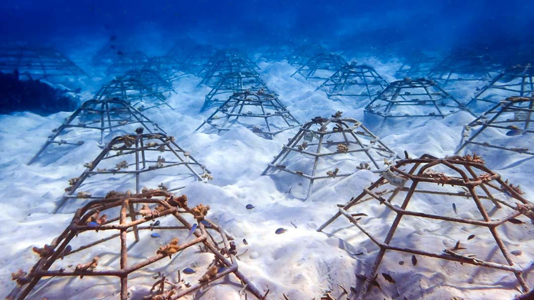 Reefscapers - recycled coral frames - Marine Savers Maldives