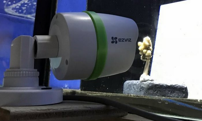 Reefscapers - webcam setup to film coral bleaching