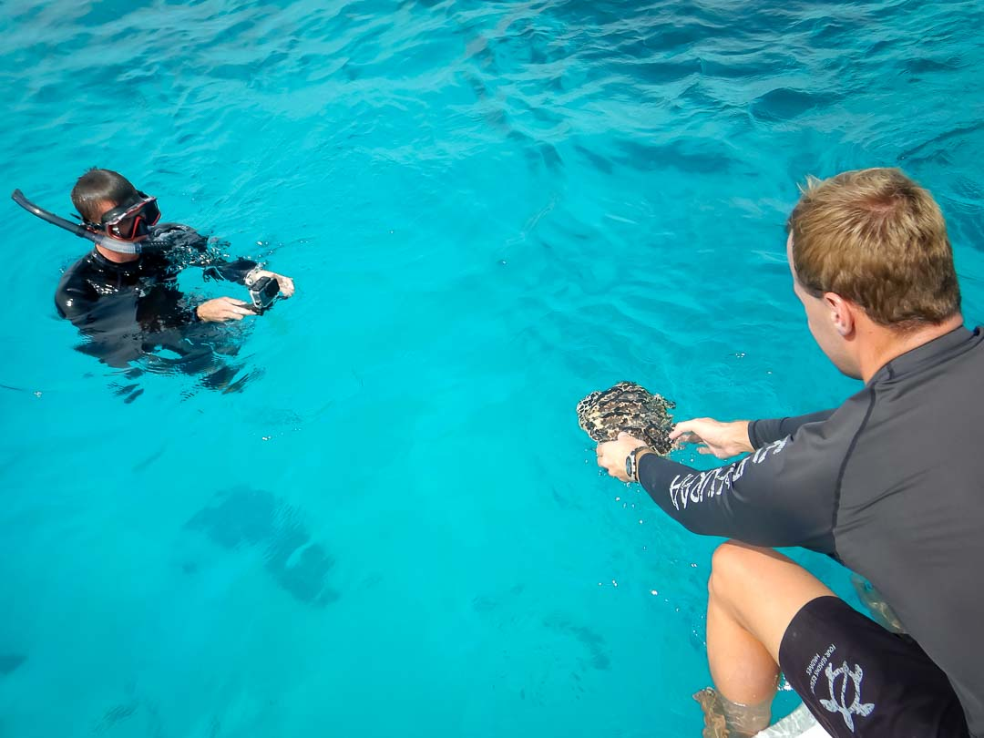 Rosie - hawksbill turtle hatchling release Marine Savers Maldives