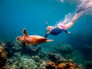 Excursions – snorkelling with a wild Hawksbill turtle, Madhirivaadhoo, Maldives (Marine Life Updates)