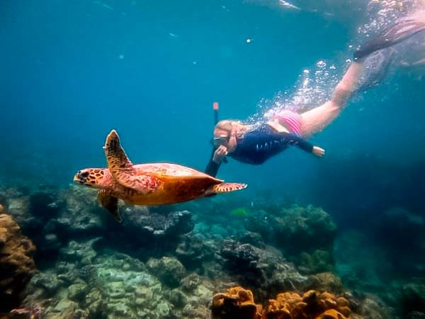 Excursions - snorkelling with a wild Hawksbill turtle, Madhirivaadhoo, Maldives