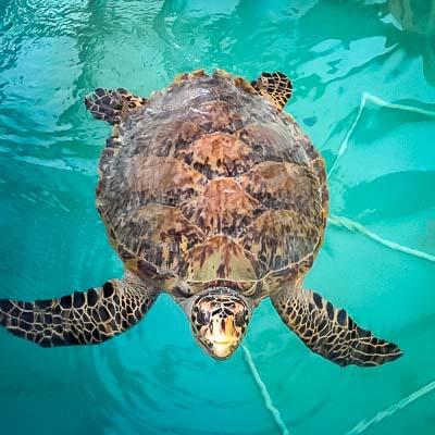 Kainalu - Seamarc Maldives marine biologist internship