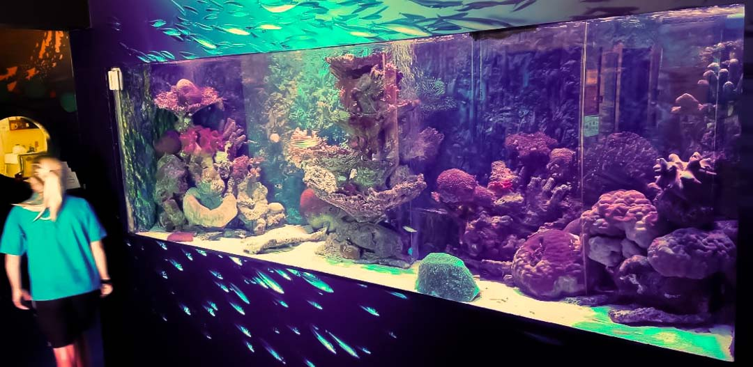 Refurbishment of our Large Marine Aquarium, Four Seasons