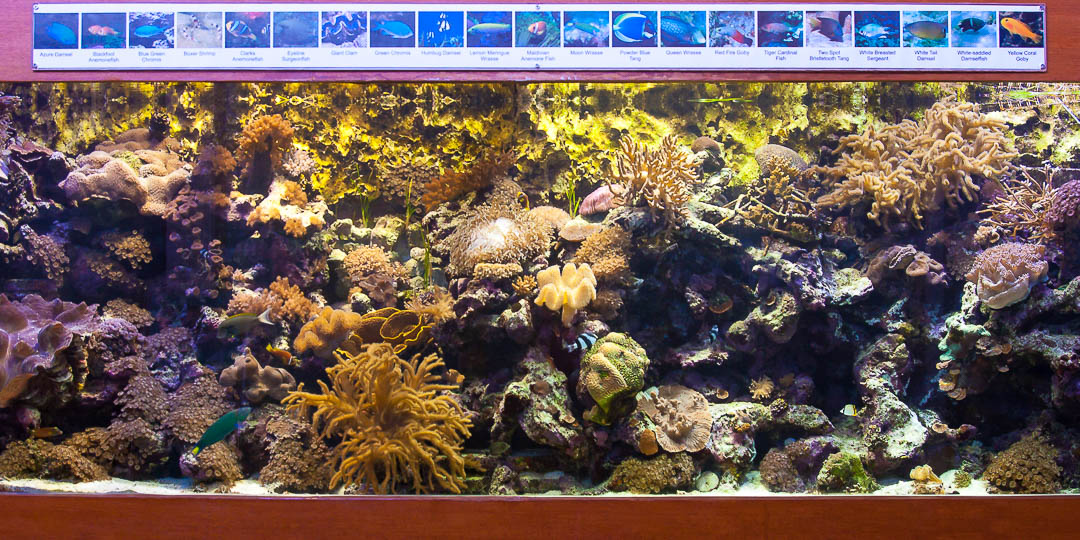 Marine aquarium, Marine Savers Maldives