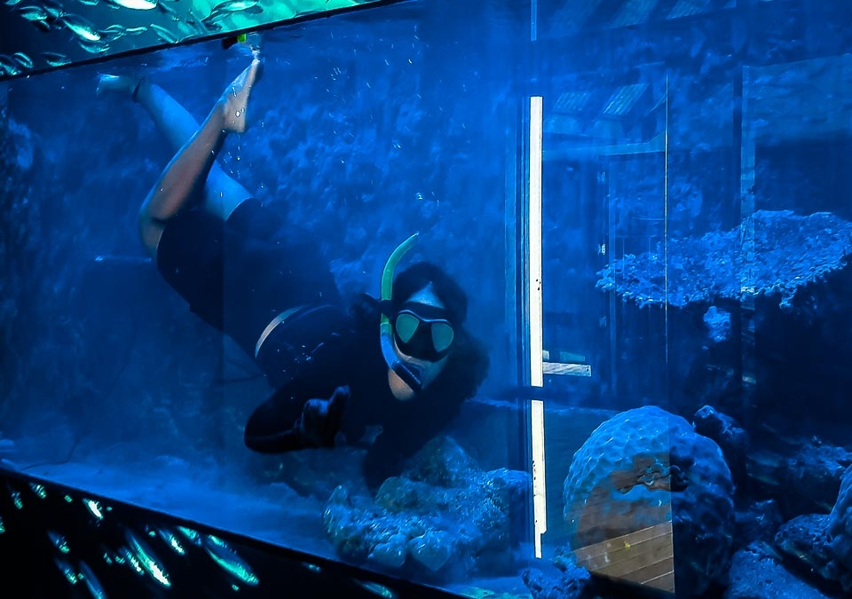 Refurbishment of our Large Marine Aquarium