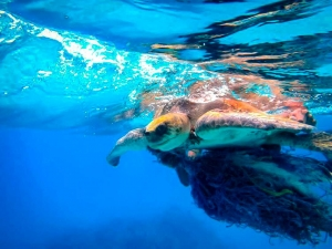 Beybe – Marine Savers Maldives – turtle conservation (Beybe)