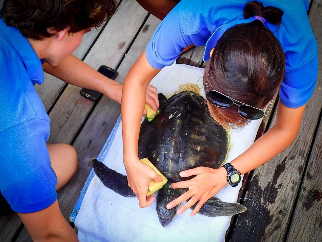 Lynn Internship Marine Savers Maldives