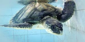Lynn Internship Marine Savers Maldives (The Captivating Underwater World)