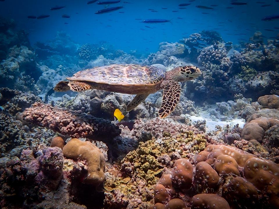 The Captivating Underwater World