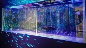 Marine Savers Maldives aquarium renovation (Refurbishment of our Large Marine Aquarium)